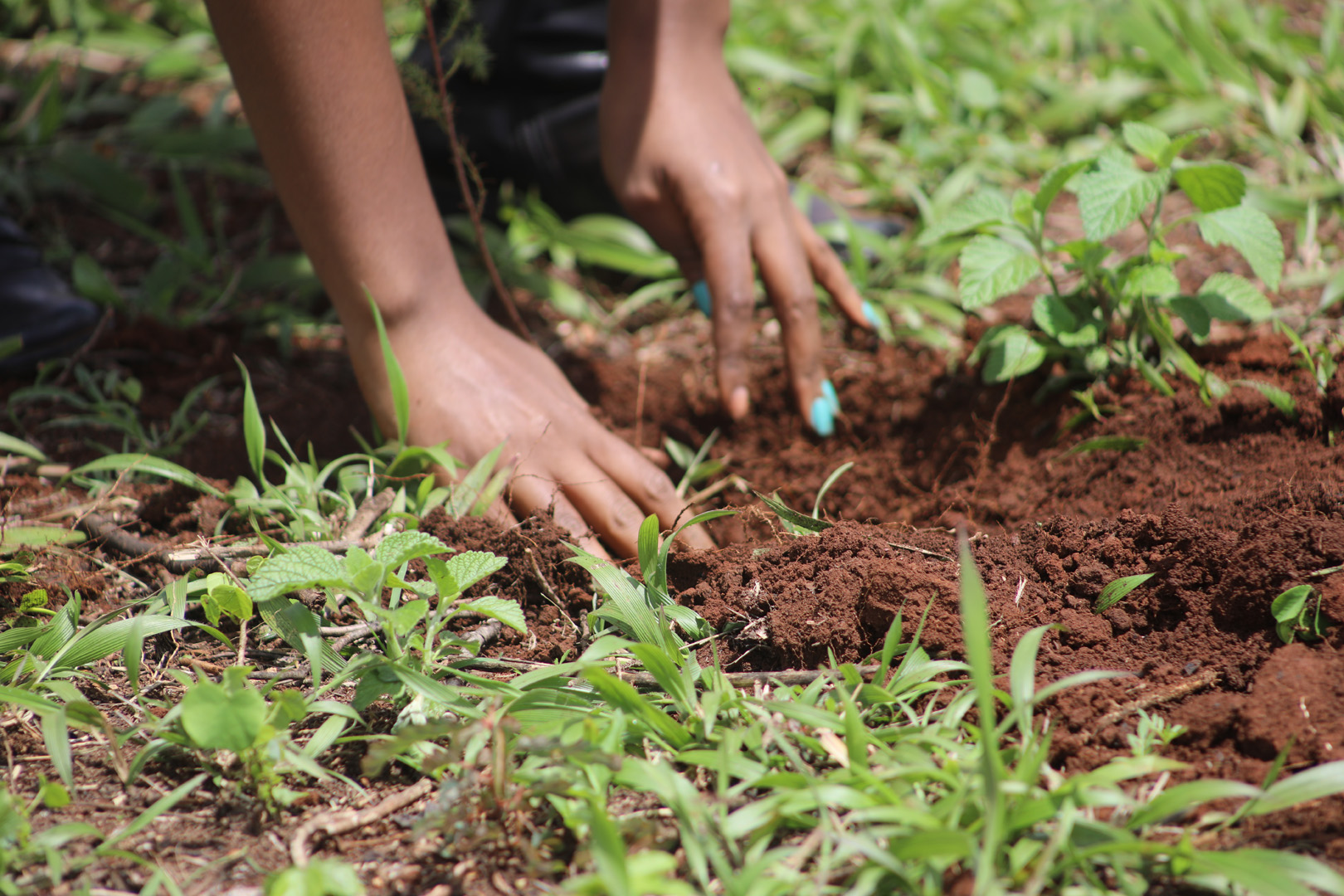 T4H Tree Planting Ceremony in Commemoration of ...